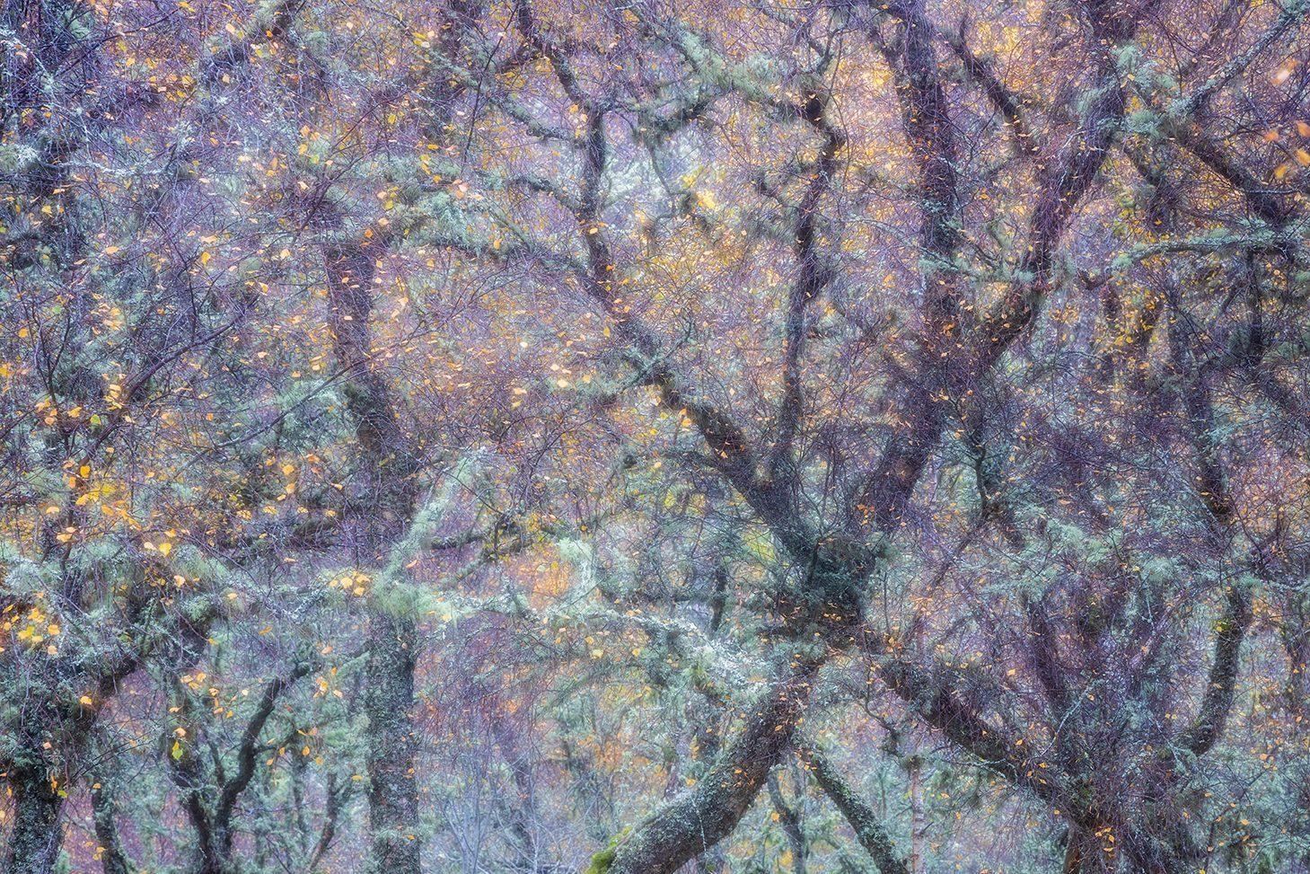 Cairngorms – Autumn Gold